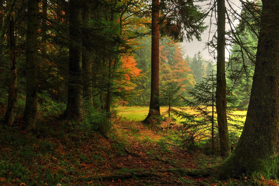 Fall Home Wallpaper Autumn Forest Backgrounds By Burtn On Deviantart