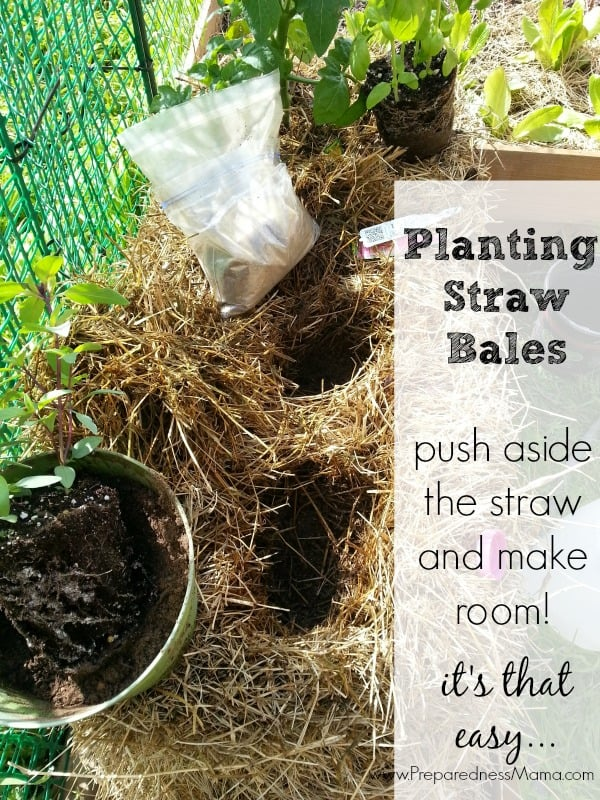 Why Your Garden Needs A Straw Bale   Preparednessmama