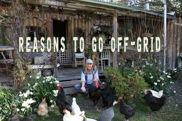 Prepper's Will - Reasons to go off-grid