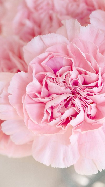 Pink Peonies iPhone Wallpaper Collection   Preppy Wallpapers