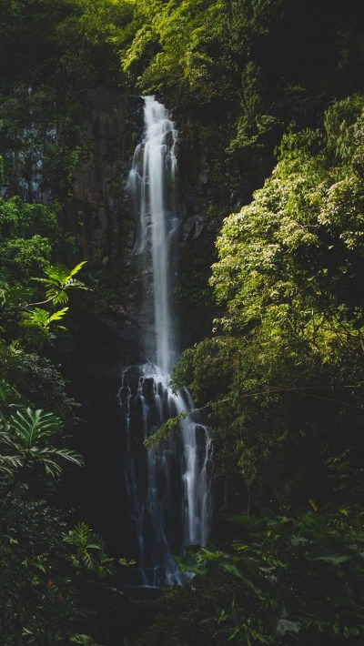 Jungle iPhone Wallpaper by Preppy Wallpapers | Preppy Wallpapers