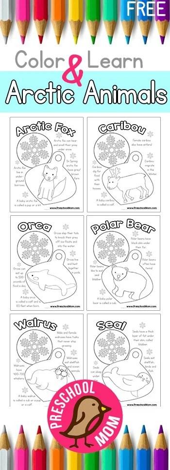 Arctic Animal Preschool Printables - Preschool Mom