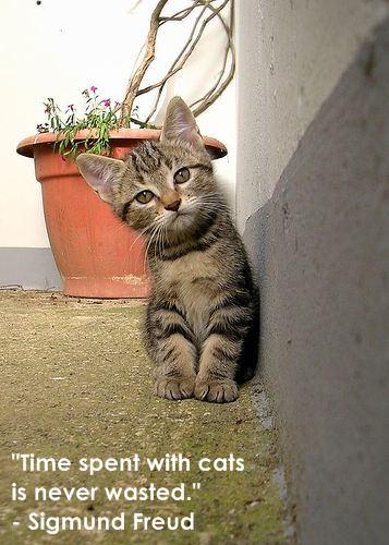 Cute little kitten!
