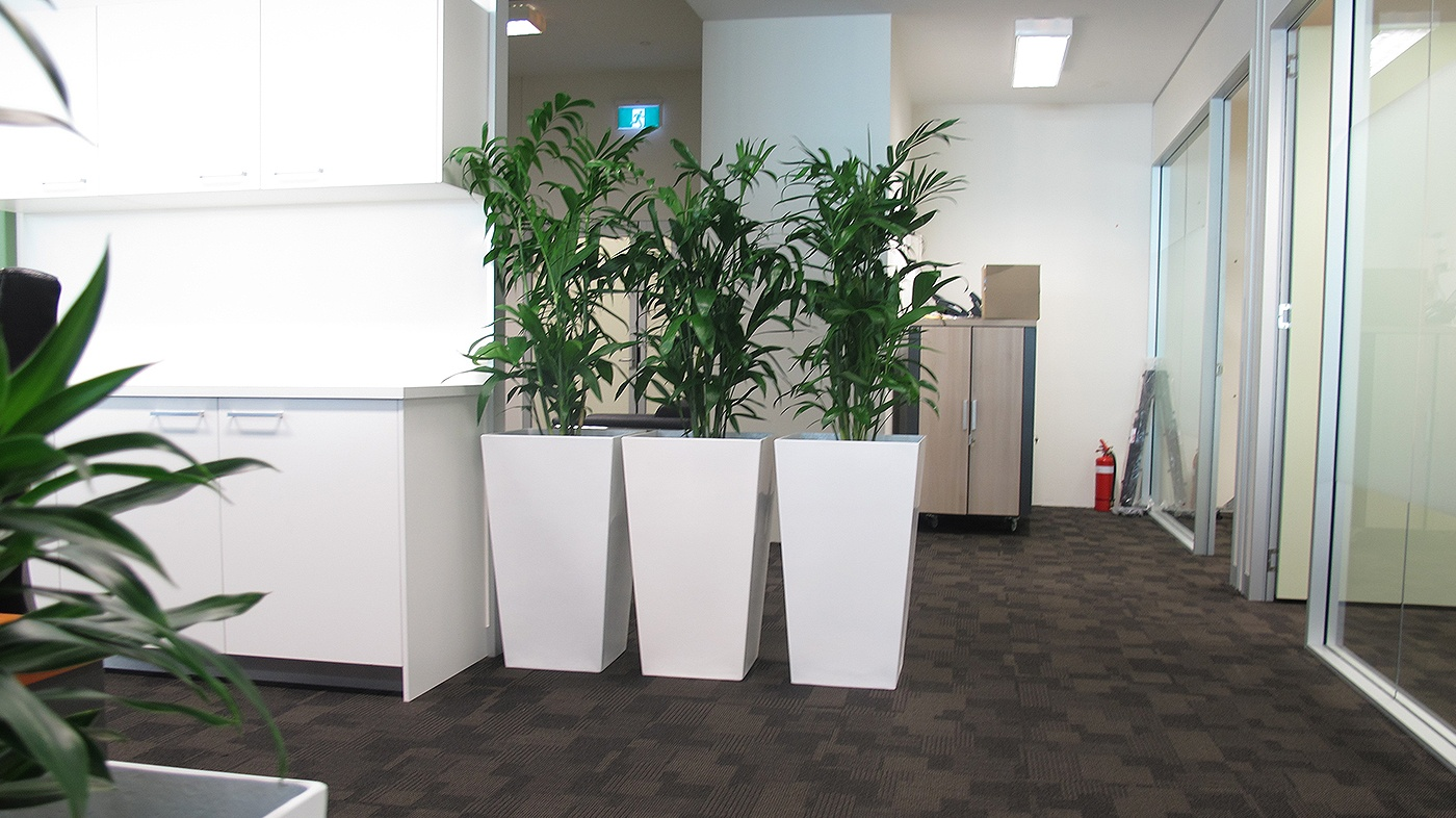 Indoor Plants For The Office How To Choose Indoor Plants For Your Office Prestigious Plantscapes