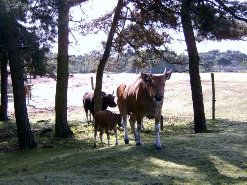 Safaripark Beekse Bergen korting trip report blog 6