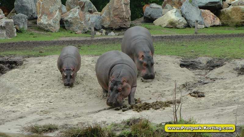 Safaripark Beekse Bergen korting trip report blog 15
