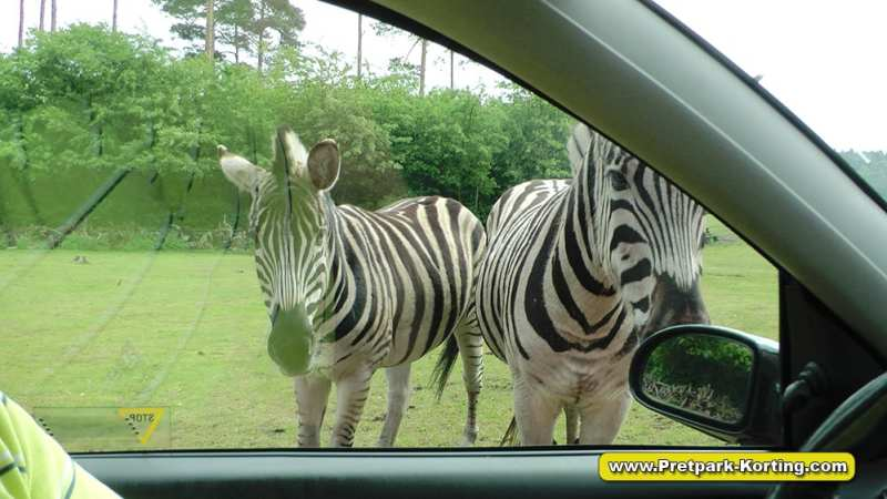 Serengeti Park dierentuin attracties duitsland report 17