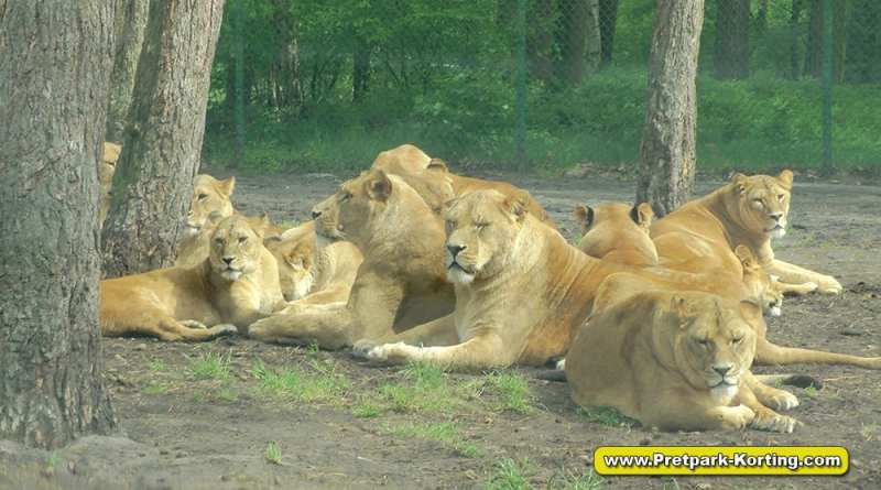 Serengeti Park dierentuin attracties duitsland report 19