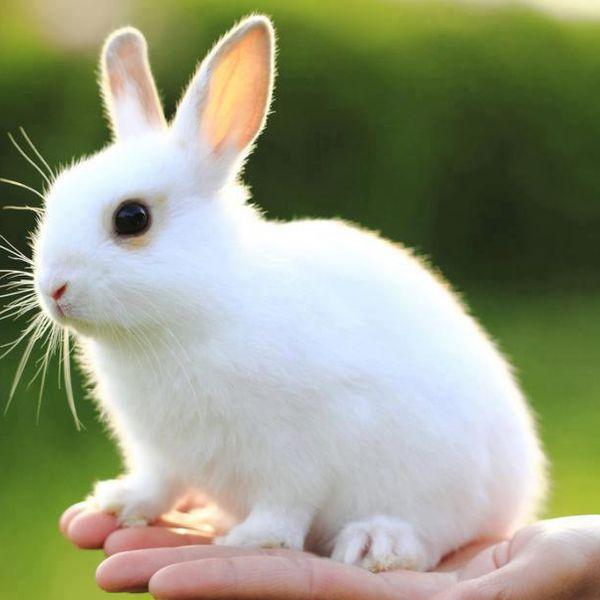 Beautiful Cute Roses Wallpapers Cute Rabbit