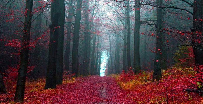 Dark Fall Wallpaper 10 Forests All Over The World That You Must See