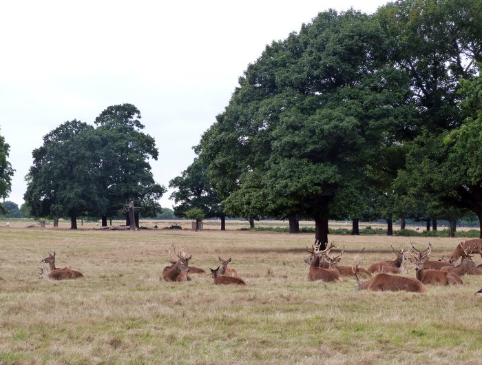 londres richmond park