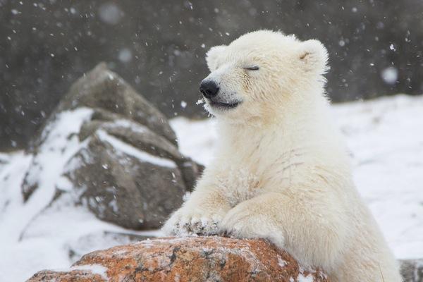 Fall Baby Animal Wallpaper Dierentuinen Een Bijzondere Belevenis In De Winter Pretwerk