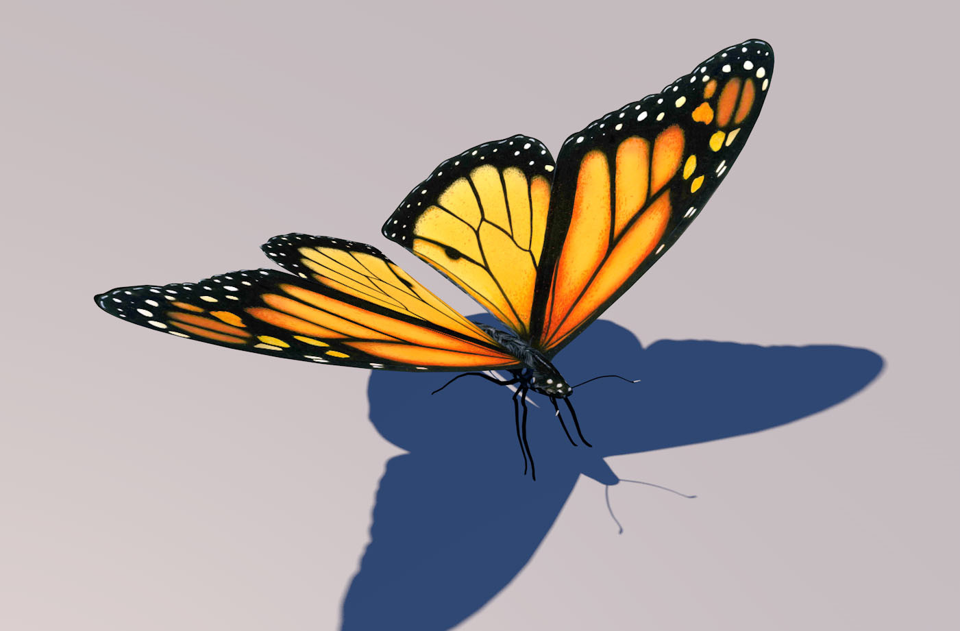 Flying Butterfly Animated Monarch Butterfly Animation 3d Model