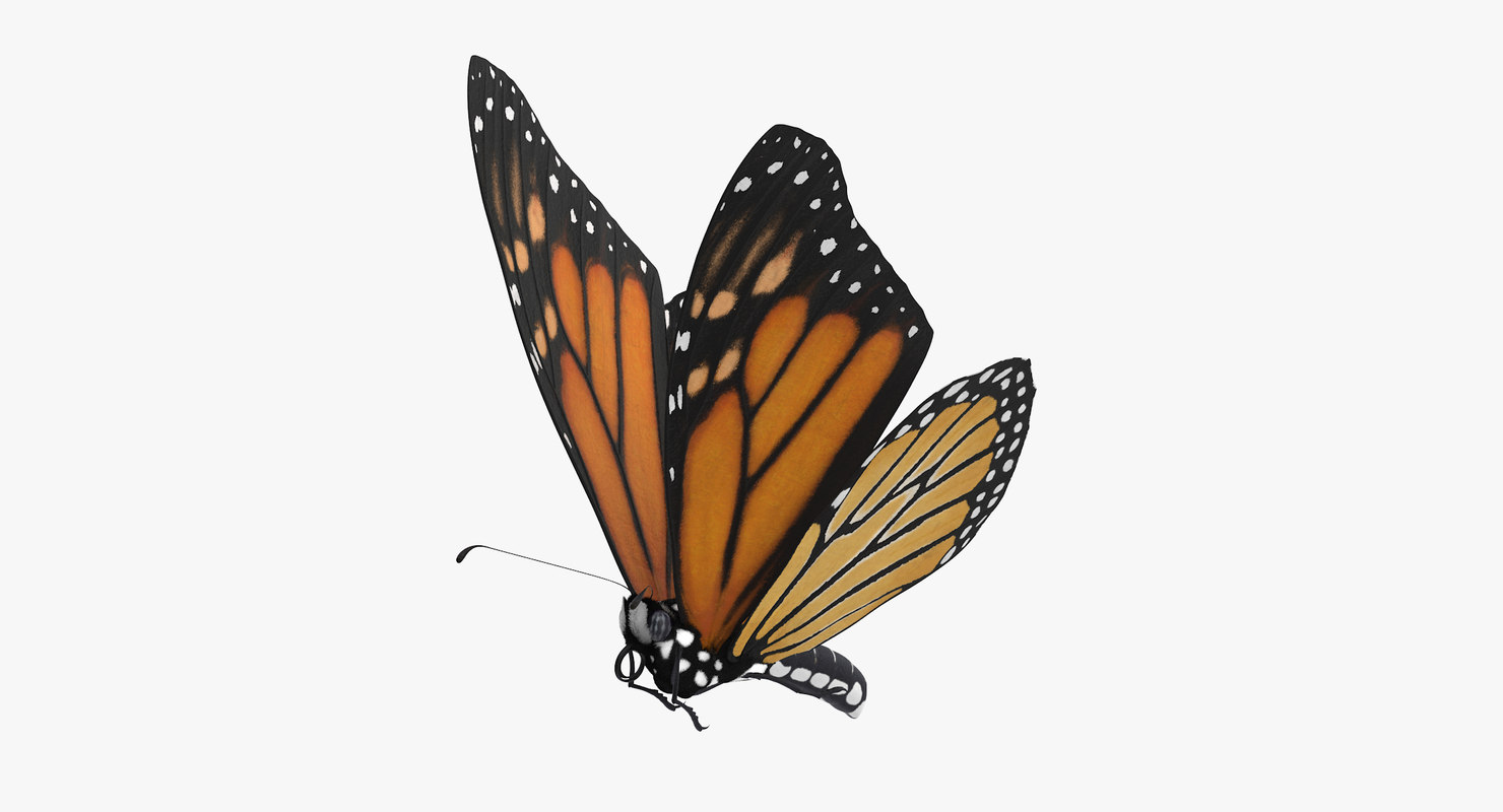 Flying Butterfly Animated 3d Monarch Butterfly Flying