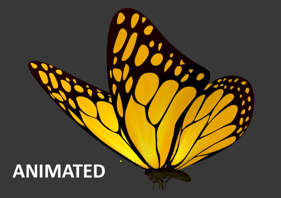 Flying Butterfly Animated Loop Animation Flying Butterfly Max