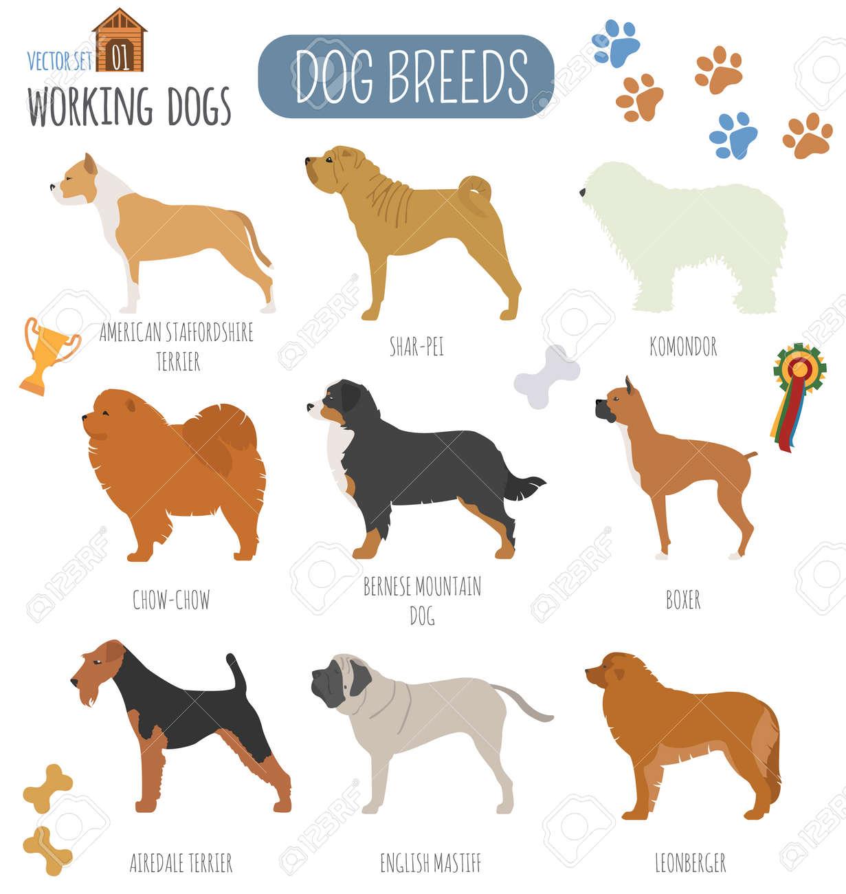 Fullsize Of Working Dog Breeds