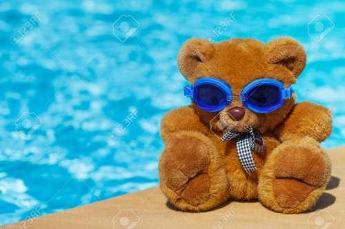 Medium Of Teddy Bear Pools