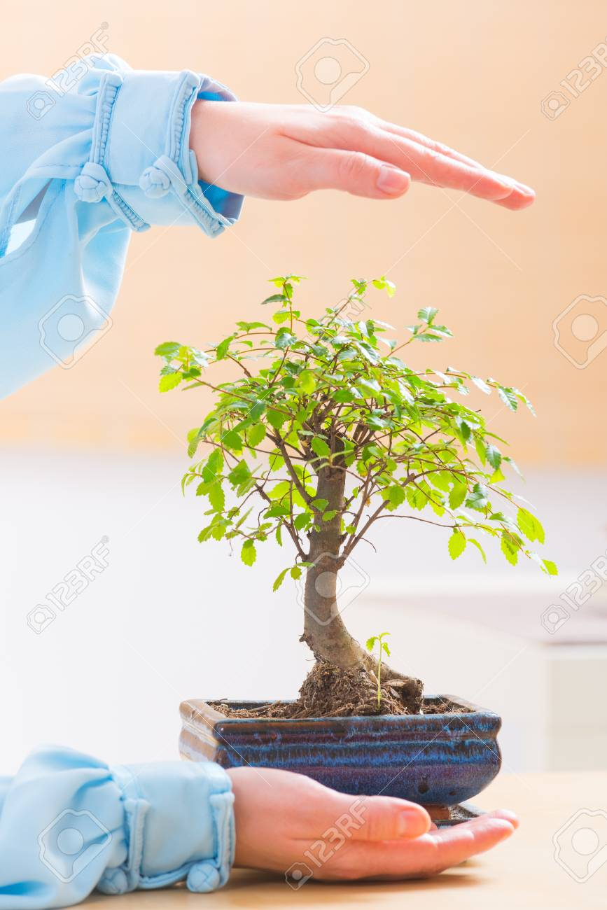 Bonsai Baum Klein Pflege Stock Photo