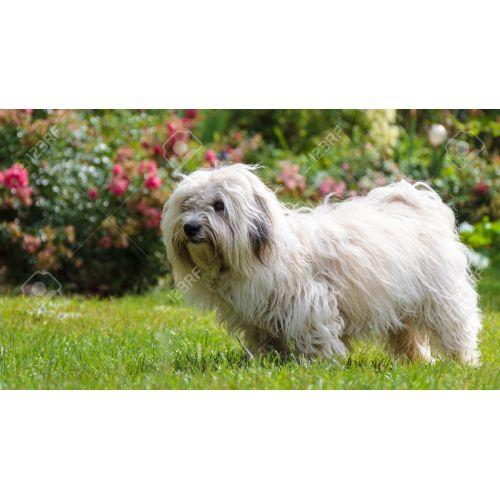 Medium Crop Of Long Hair Dog