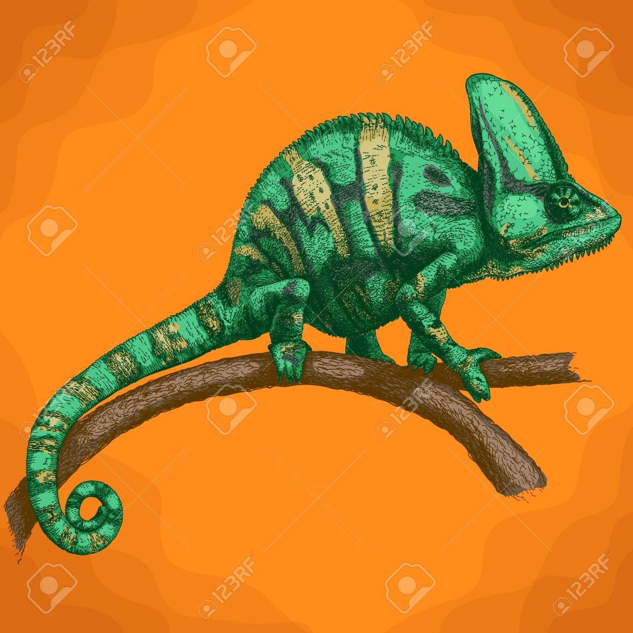 Chameleon Style Vector Antique Engraving Illustration Of Chameleon In Retro Style