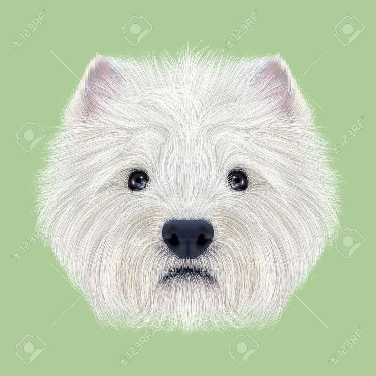 Charmful West Land Fluffy Faceof Domestic Dog On Illustrated Portrait Pets Fluffy Dog Breeds West Land Fluffy Fluffy Dog Illustrated Portrait Secret Life bark post Fluffy White Dog