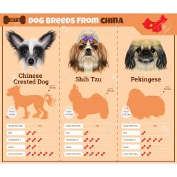 Natural Dog Breeds From Breed Set Chinese Dogs Breed Vector Infographics Types India Dog Breeds From China Chinese Dog Breed Codycross Chinese Dog Breeds Dogs Breed Vector Infographics Types