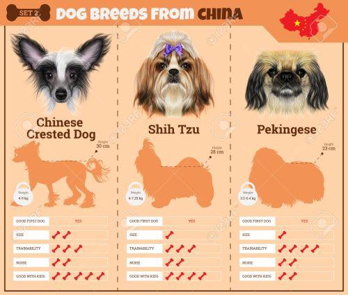 Medium Of Chinese Dog Breeds