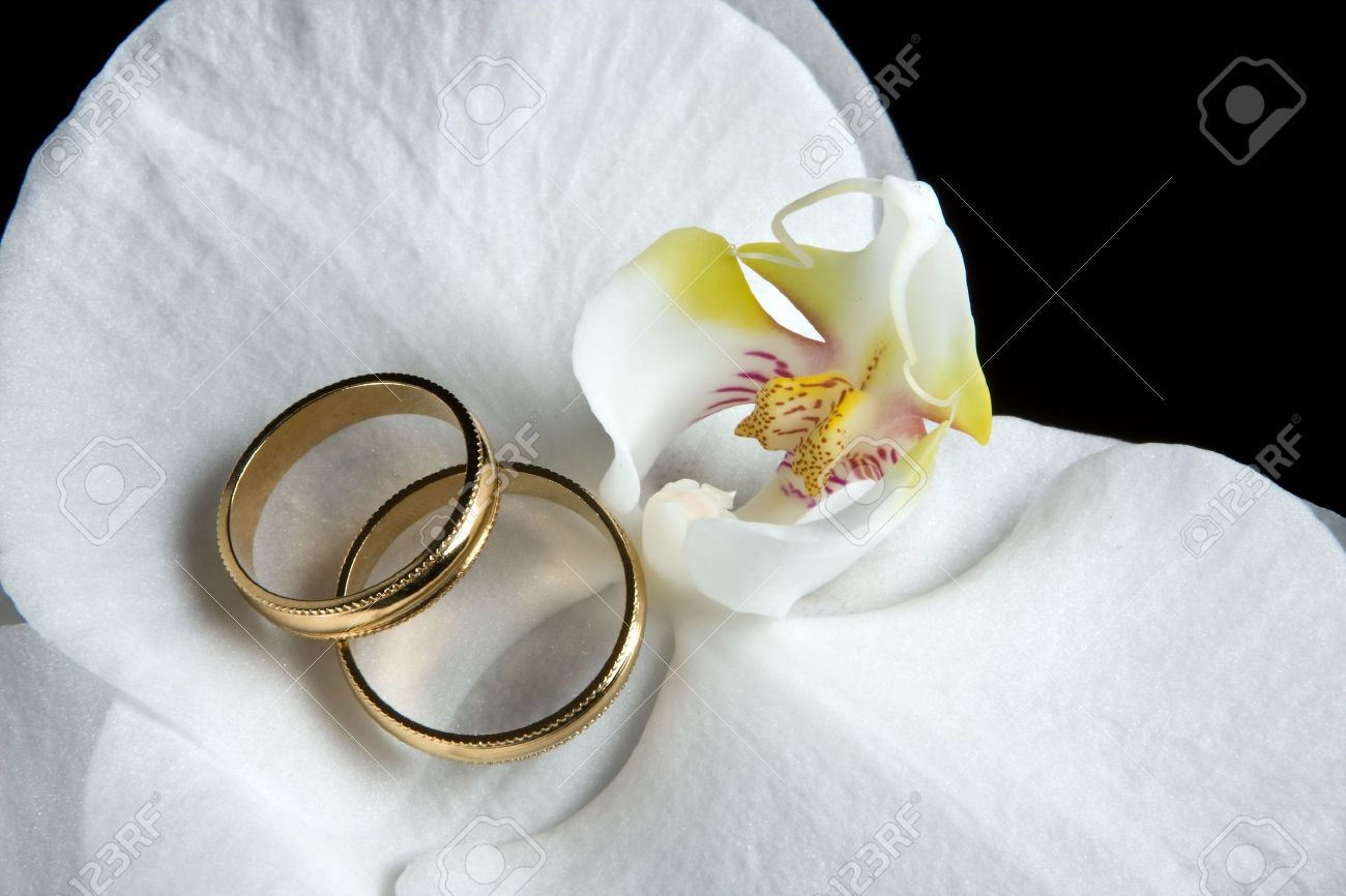 photo wedding rings lying on white orchid flowers flower wedding ring Stock Photo Wedding rings lying on white orchid flowers