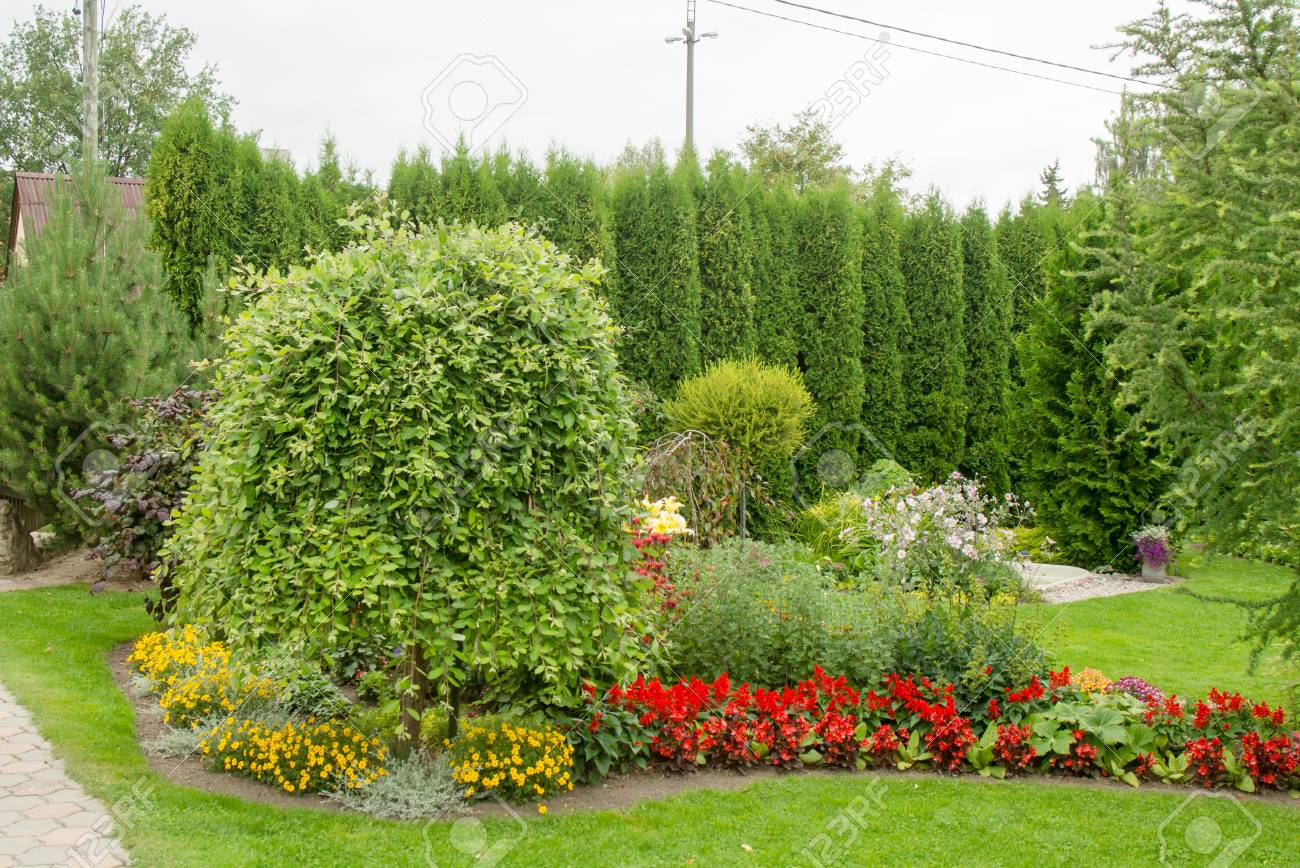 Gartengestaltung Hecke Stock Photo