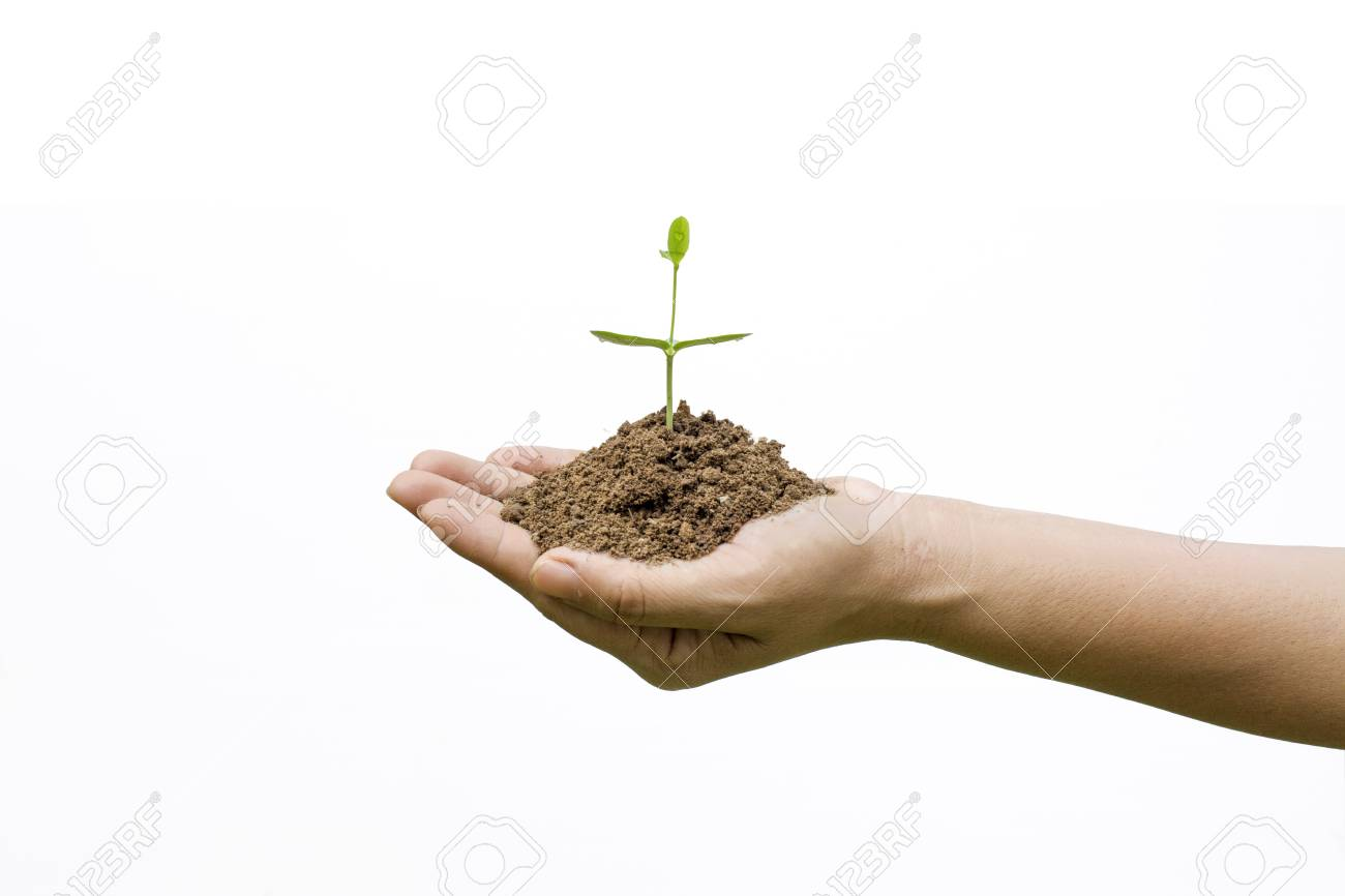 Bonsai Aarde Plant Growing With Soil On Woman Hands On White Background