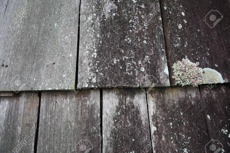 Large Of White Mold On Wood