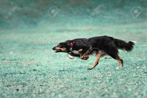 Medium Of How Fast Can A Dog Run
