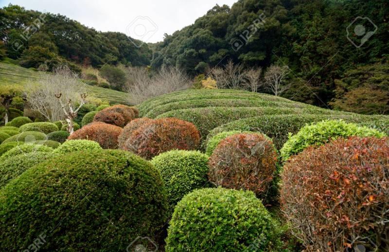 Large Of Japanese Garden Plants
