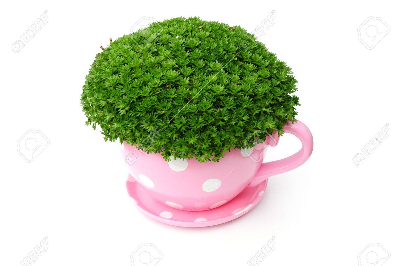 Large Tea Cup Planter Giant Tea Cup Planter