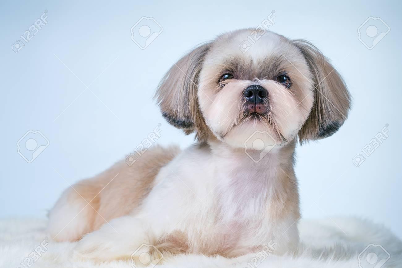 Fantastic Females Pet Grooming Good Bad Furry A Shih Tzu Ly Groomed