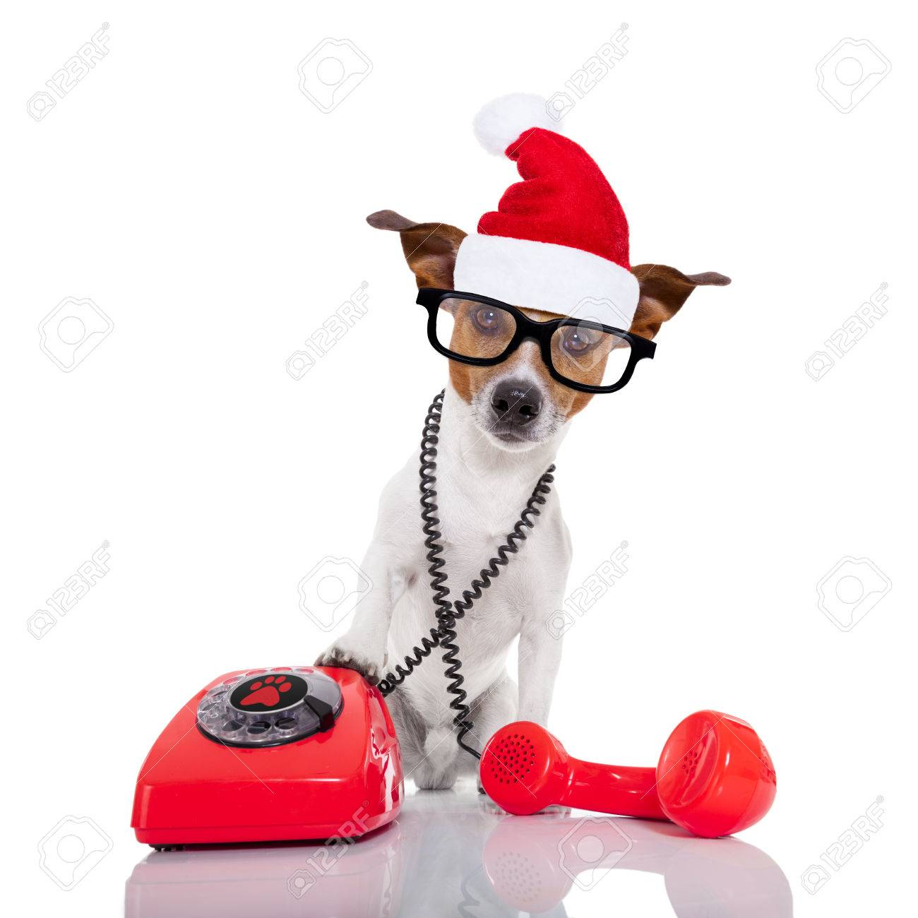 Weihnachten Hund Stock Photo