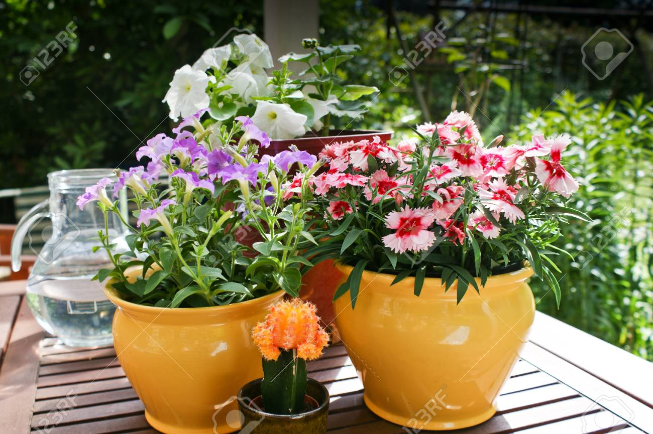 Hanging Basket Bepflanzen Spring Flowers In Pots Dianthus And Petunias On A Garden Table