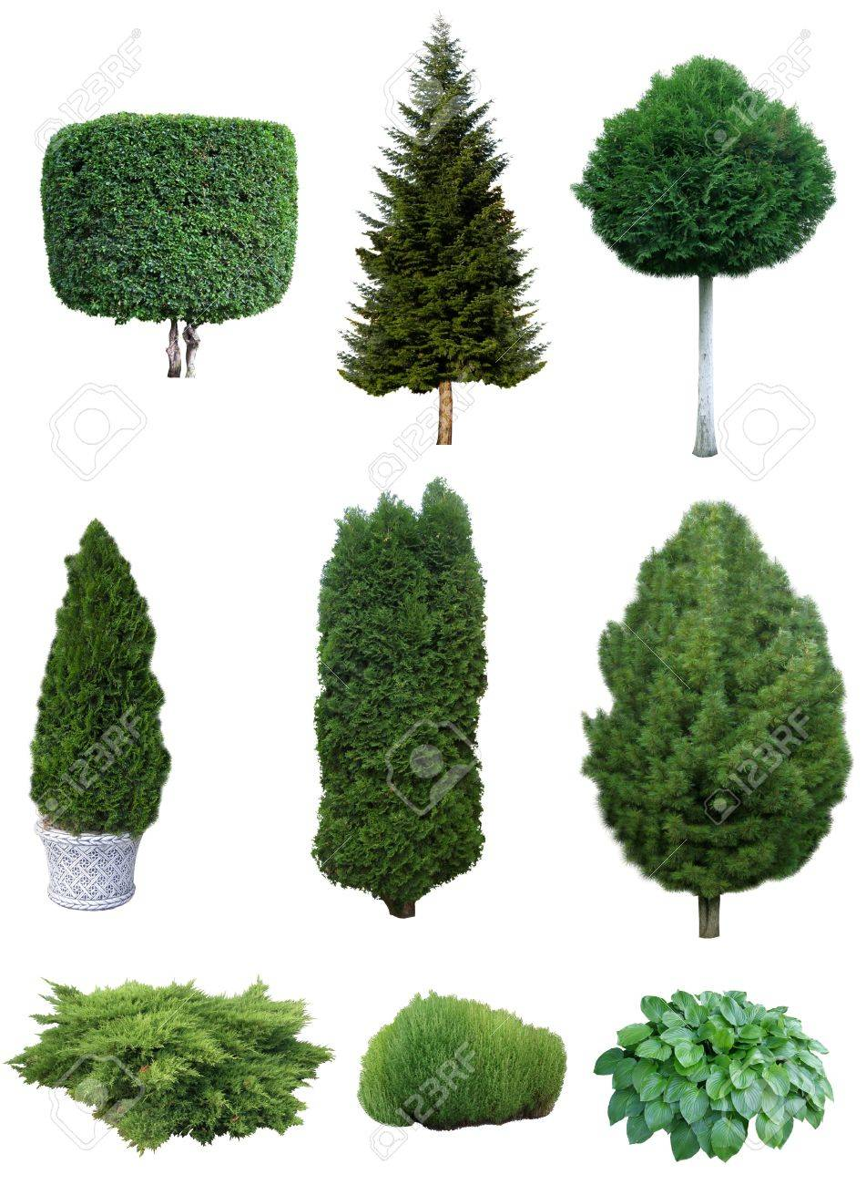 Trees And Shrubs Set Of Various Evergreen Trees And Shrubs For The Garden Design