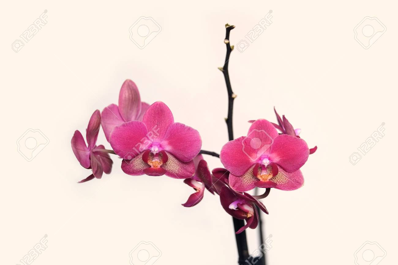Orchidee Blume Stock Photo