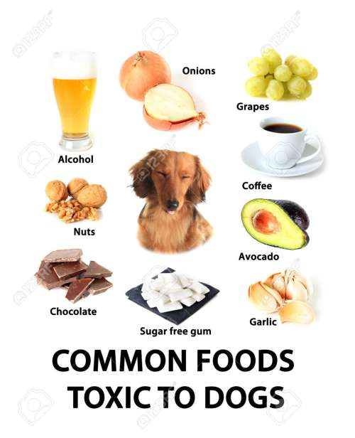 Medium Of Are Avocados Bad For Dogs
