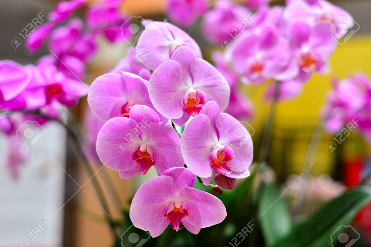 Blumen Orchideen Stock Photo