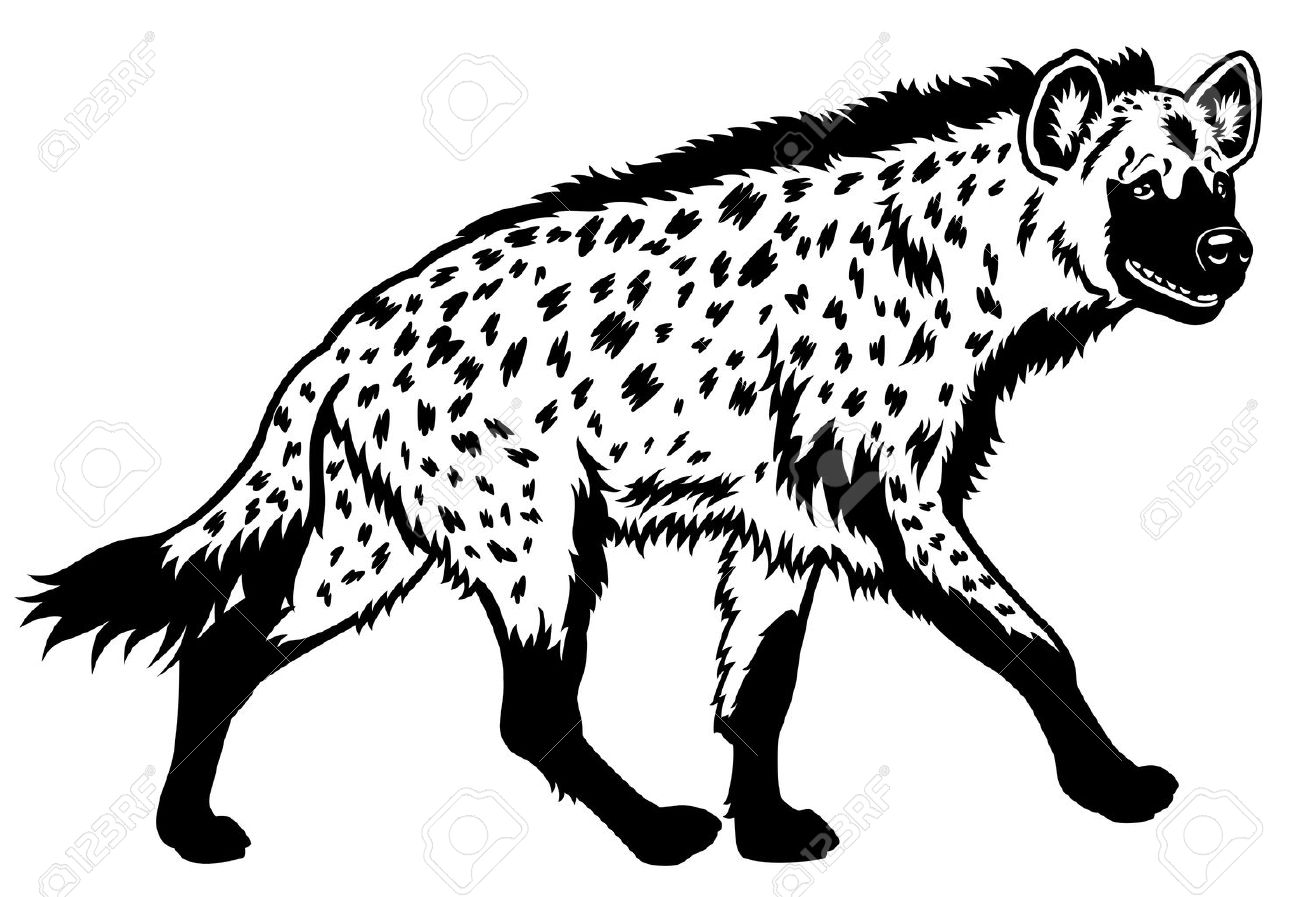 Spotted hyena spotted hyena africa animal black white picture side view illustration