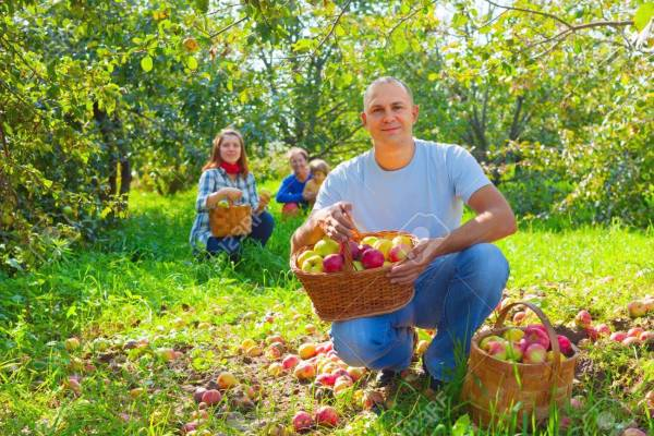 Image result for family photo apple orchard