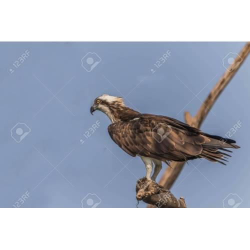 Medium Crop Of Eagle Vs Hawk