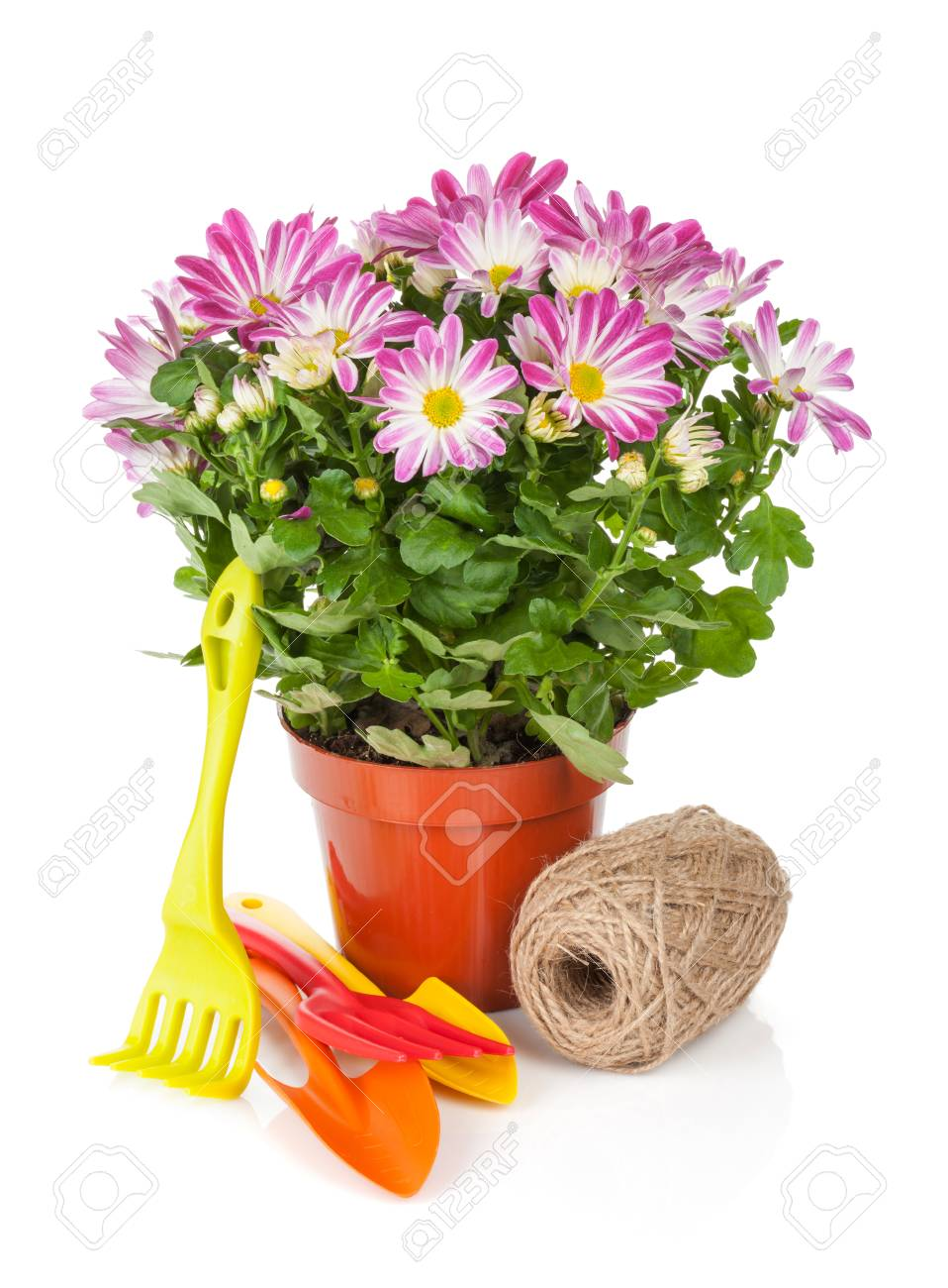 Topf Blumen Stock Photo