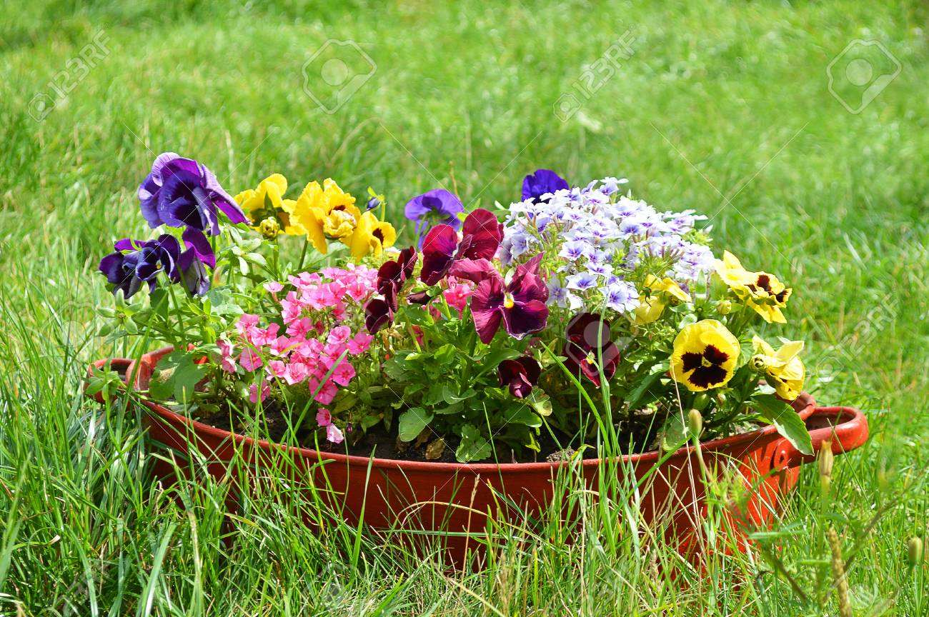 Garten Blumen Ideen Stock Photo