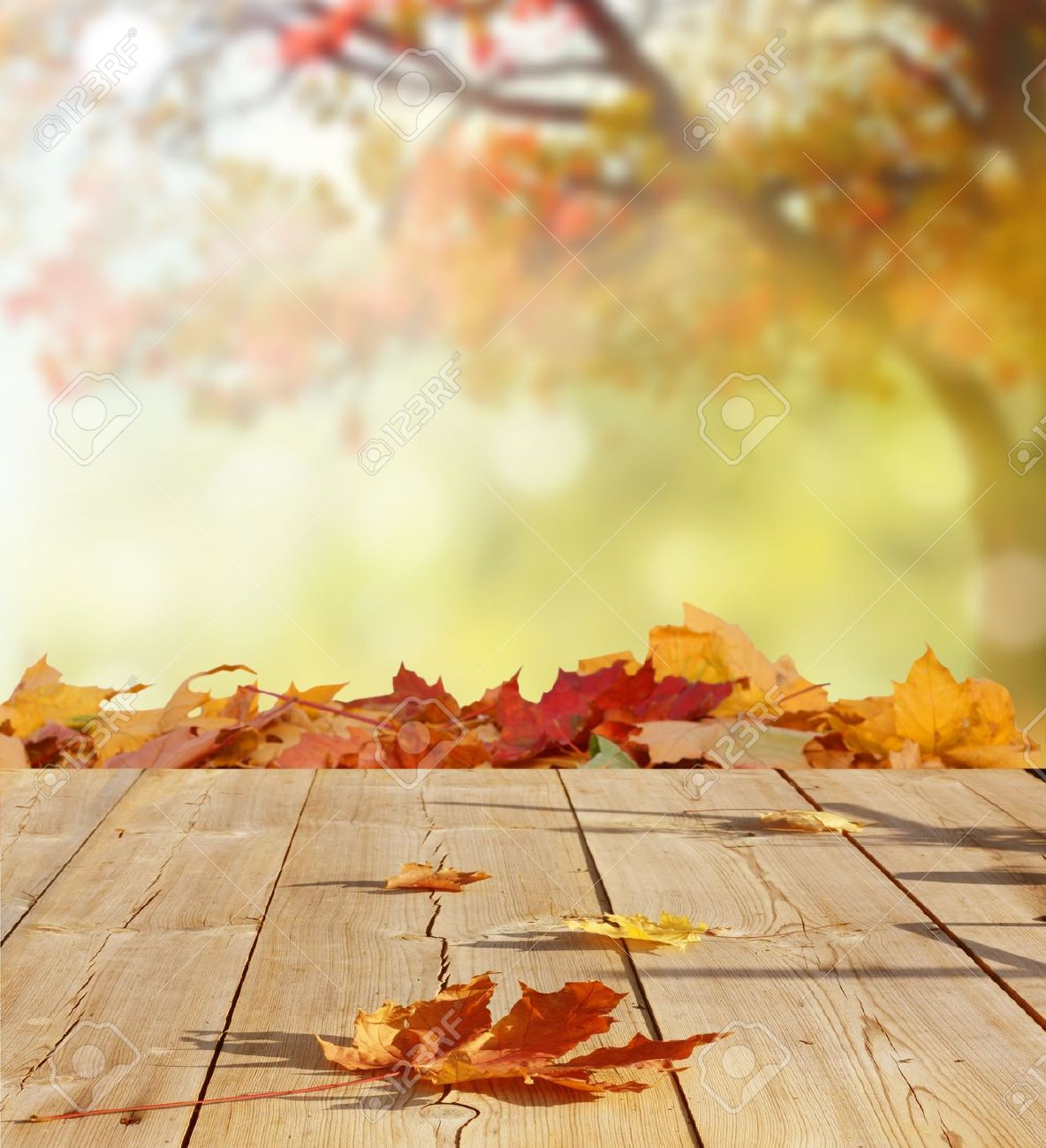 Free Photography Stock Autumn Background