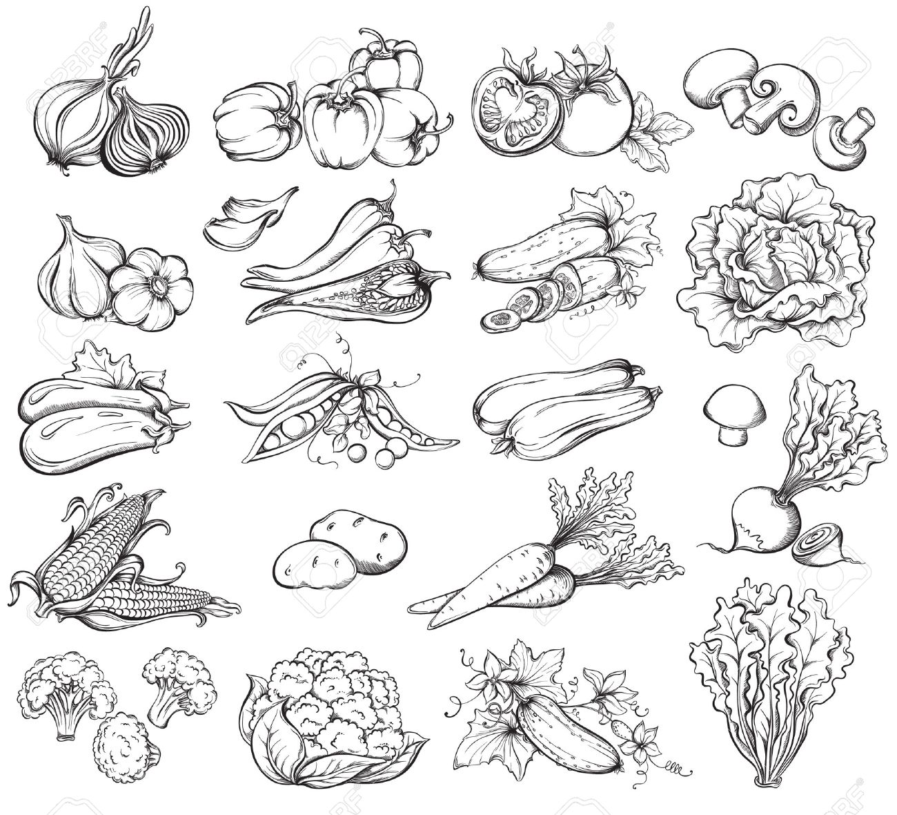 Vegetable garden sketch -  Vegetable Garden Sketch Hand Drawn Download