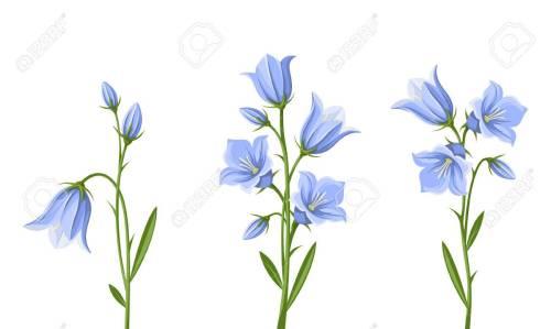Medium Of Blue Bell Flower