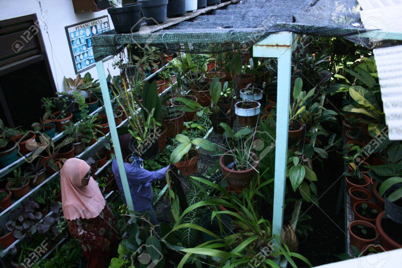 Asian Plants For Sale Flowers And Plants For Sale For Planting In Spring In Indonesia